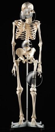 Skelett<br />Kunde: MCP-HEK GmbH