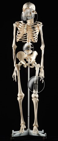 Skeleton<br />Client: MCP-HEK GmbH